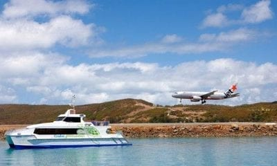 Whale migration to Whitsundays