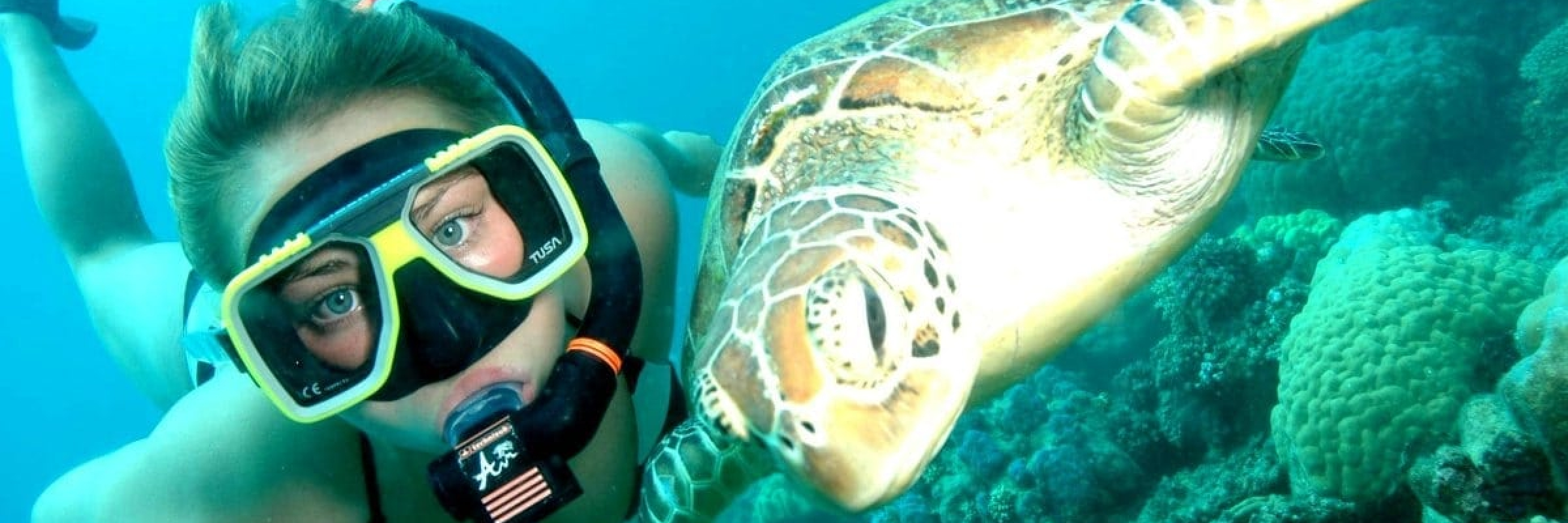 Big-Fury-Snorkelling-with-Turtle