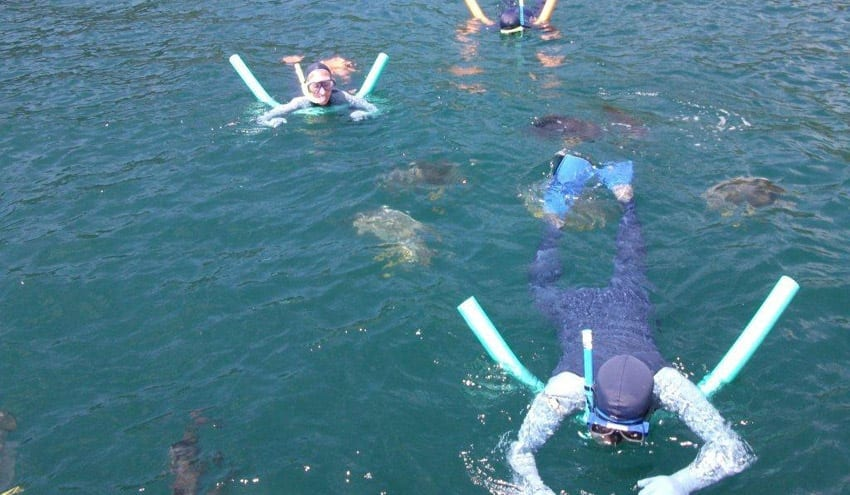 Snorkelling in the Whitsundays